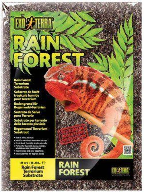 Bilde av Rain Forest