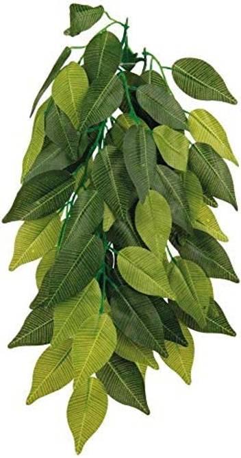 Bilde av Silk Hanging Ficus Plant